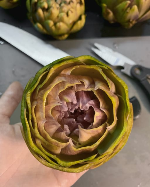 Selecting artichokes is quite important which is seldom mentioned by many Italian artichoke recipes. The good ones are easy to clean and less aggressive to eat.